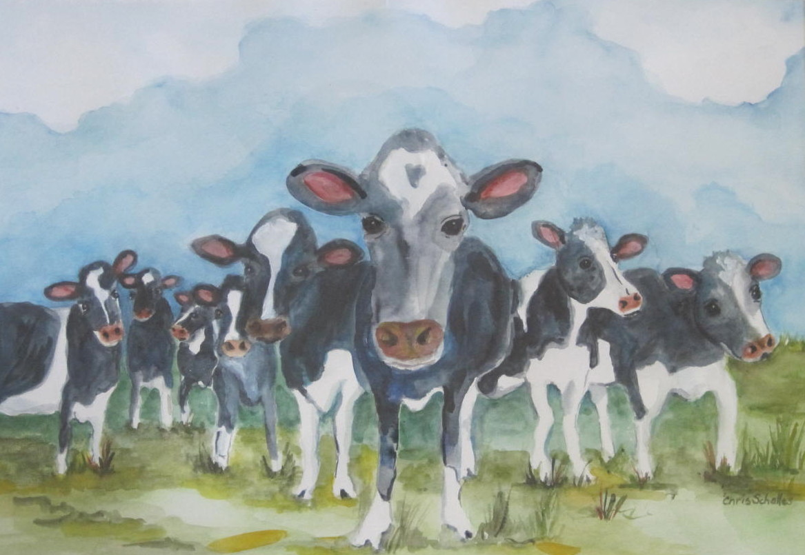 Many Curious Cows